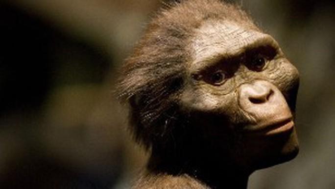 Phát hiện khuôn mặt mới của tổ tiên loài người 3,9 triệu tuổi - Ảnh 2.