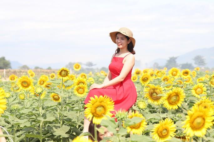 Phát sốt với vườn hoa hướng dương mới xuất hiện ở Quảng Nam - Ảnh 15.