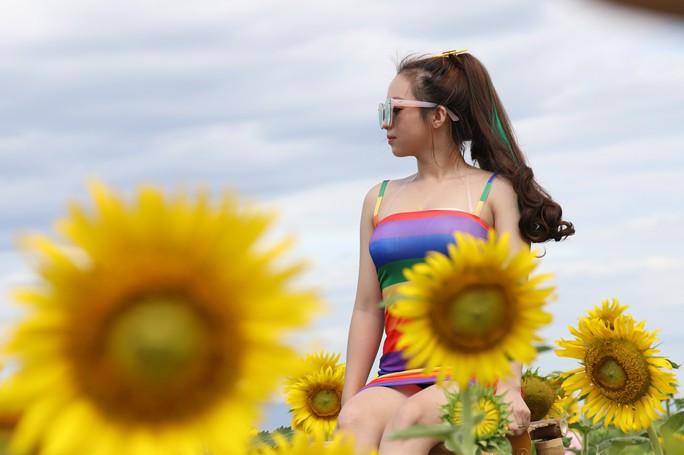 Phát sốt với vườn hoa hướng dương mới xuất hiện ở Quảng Nam - Ảnh 9.