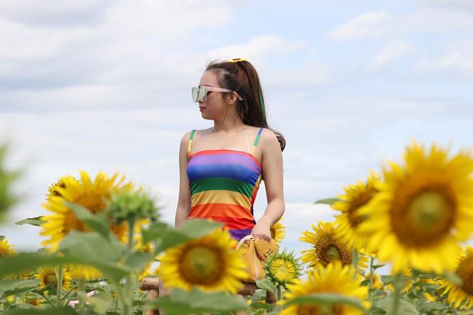 Phát sốt với vườn hoa hướng dương mới xuất hiện ở Quảng Nam - Ảnh 10.
