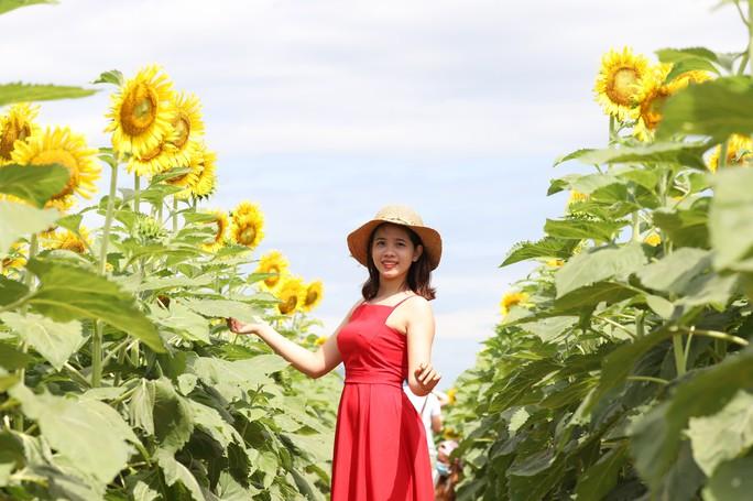 Phát sốt với vườn hoa hướng dương mới xuất hiện ở Quảng Nam - Ảnh 8.
