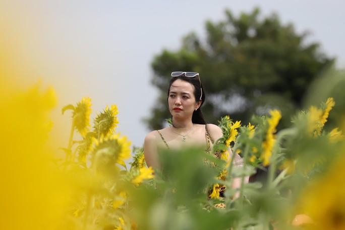 Phát sốt với vườn hoa hướng dương mới xuất hiện ở Quảng Nam - Ảnh 16.