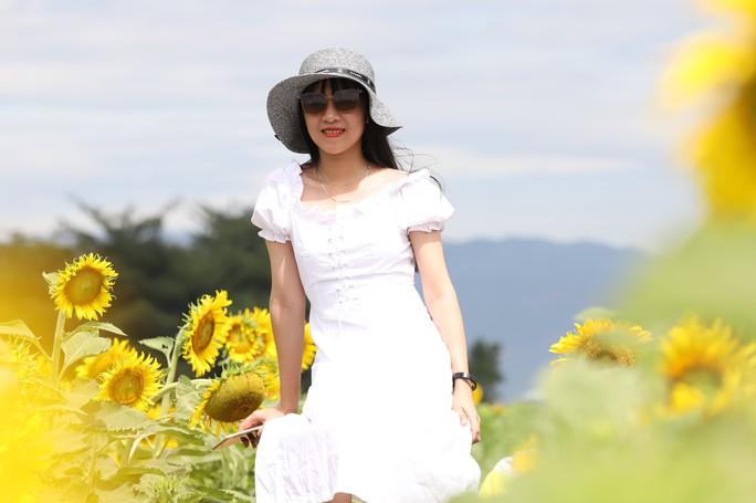 Phát sốt với vườn hoa hướng dương mới xuất hiện ở Quảng Nam - Ảnh 2.