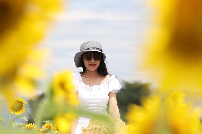 Phát sốt với vườn hoa hướng dương mới xuất hiện ở Quảng Nam - Ảnh 4.
