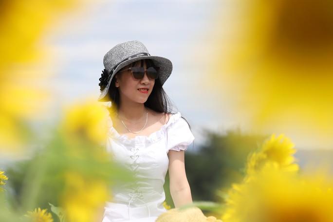 Phát sốt với vườn hoa hướng dương mới xuất hiện ở Quảng Nam - Ảnh 3.