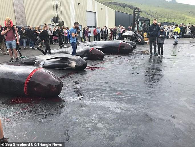 Hàng chục cá voi bị giết, máu nhuộm đỏ nước quần đảo Faroe - Ảnh 4.