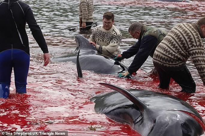 Hàng chục cá voi bị giết, máu nhuộm đỏ nước quần đảo Faroe - Ảnh 8.