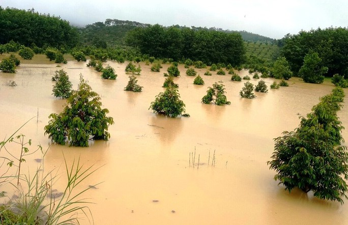 Nước sông Đồng Nai dâng cao, 1 người tử vong do rơi cống thoát nước - Ảnh 6.