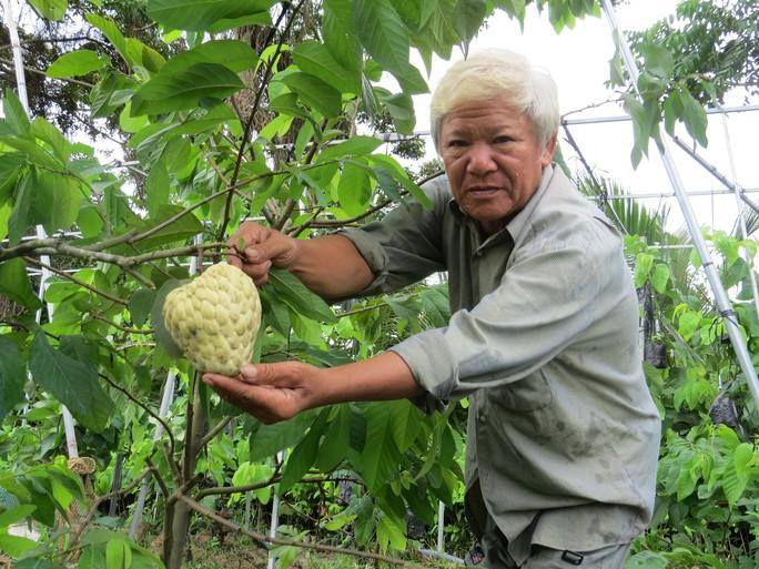 Lão nông với vườn mãng cầu dai cho trái khổng lồ - Ảnh 1.