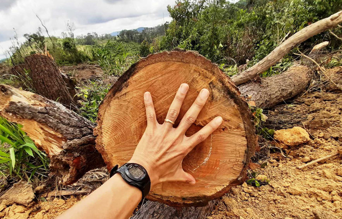 Lâm Đồng: Lại phát hiện phá rừng hàng chục năm tuổi - Ảnh 5.