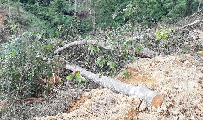 Lâm Đồng: Lại phát hiện phá rừng hàng chục năm tuổi - Ảnh 4.
