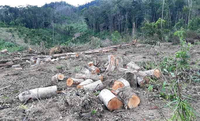 Lâm Đồng: Lại phát hiện phá rừng hàng chục năm tuổi - Ảnh 2.