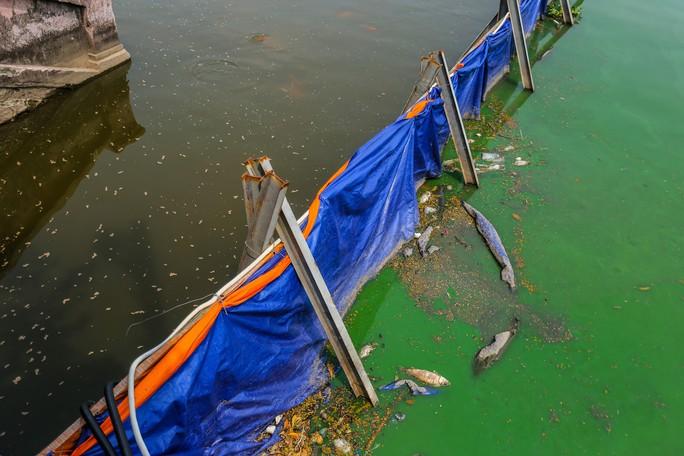 Clip: Thả 100 con cá Koi Nhật Bản xuống đoạn sông Tô Lịch làm sạch và Hồ Tây - Ảnh 9.