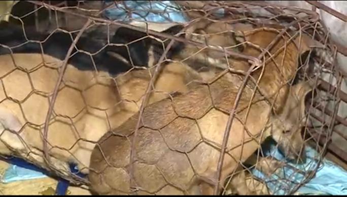 Clip, hình ảnh đường dây trộm chó hơn 100 tấn ở Thanh Hóa - Ảnh 3.
