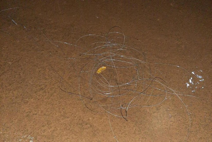 Điện lực Đắk Nông nói gì về việc điện giật chết 2 em học sinh trên đường - Ảnh 1.