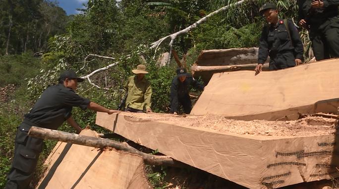 Vụ điều công an khác địa bàn đi bắt gỗ lậu: Thu giữ thêm 500 mét khối gỗ - Ảnh 1.