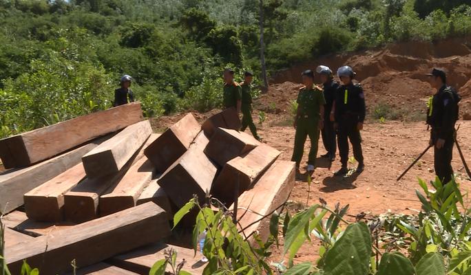 Vụ điều công an khác địa bàn đi bắt gỗ lậu: Thu giữ thêm 500 mét khối gỗ - Ảnh 2.