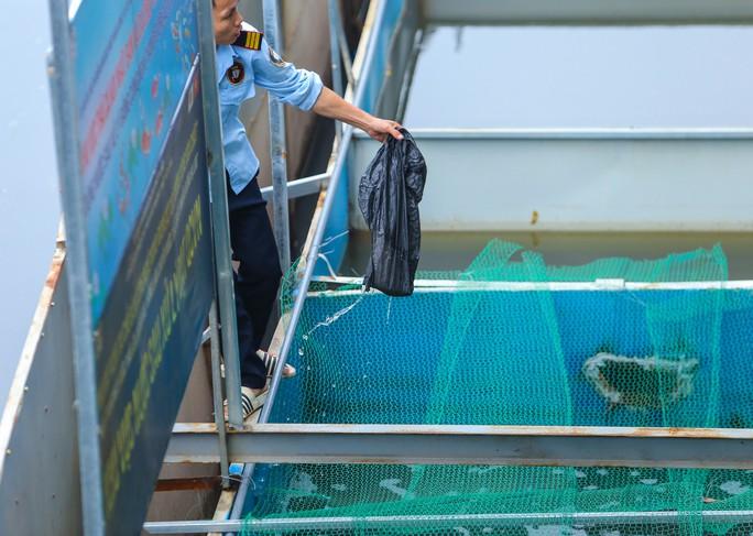 Clip: Đàn cá Koi Nhật Bản bơi chậm chạp sau 3 ngày thả xuống nước được xử lý ở sông Tô Lịch - Ảnh 6.