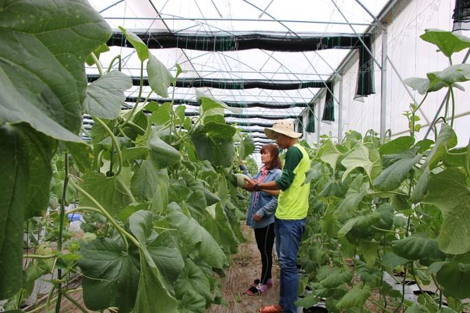 Đồng Tháp níu chân du khách bằng du lịch nông nghiệp sạch - Ảnh 1.