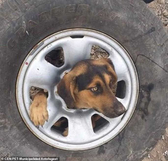 Giải thoát cô chó kẹt đầu không hiểu nổi vào giữa bánh xe - Ảnh 1.