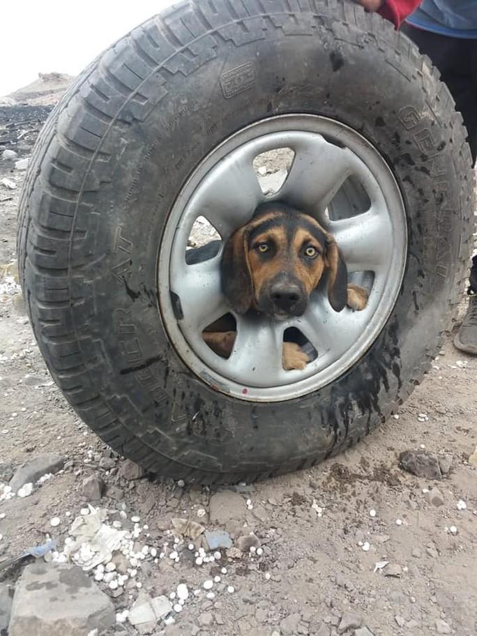 Giải thoát cô chó kẹt đầu không hiểu nổi vào giữa bánh xe - Ảnh 5.