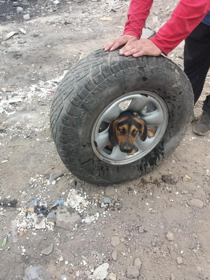 Giải thoát cô chó kẹt đầu không hiểu nổi vào giữa bánh xe - Ảnh 4.