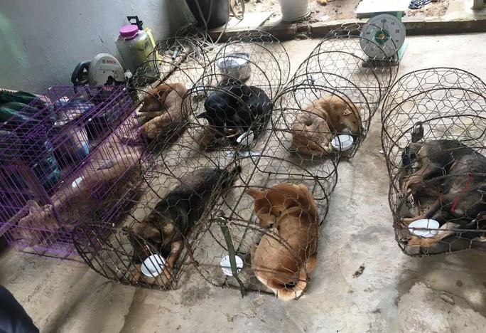 Vụ triệt phá băng nhóm trộm chó hơn 100 tấn: ACPA hỗ trợ chăm sóc chó bị thương - Ảnh 3.