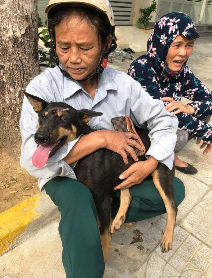 Vụ triệt phá băng nhóm trộm chó hơn 100 tấn: ACPA hỗ trợ chăm sóc chó bị thương - Ảnh 4.