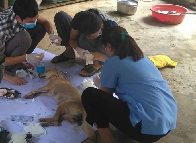 Vụ triệt phá băng nhóm trộm chó hơn 100 tấn: ACPA hỗ trợ chăm sóc chó bị thương - Ảnh 2.