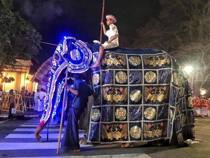Con voi gầy trơ xương qua đời sau 70 năm làm nô lệ - Ảnh 3.