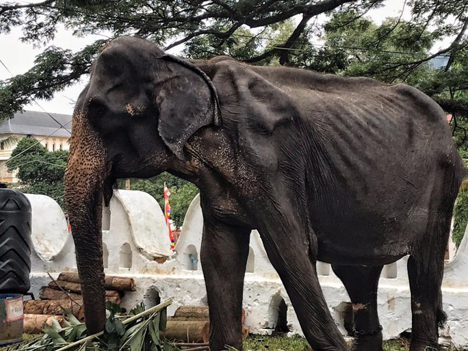 Con voi gầy trơ xương qua đời sau 70 năm làm nô lệ - Ảnh 4.