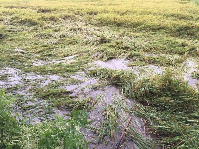Quảng Trị: Mưa lớn khiến nhiều vùng bị nước dâng chia cắt - Ảnh 4.