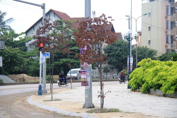 Hàng trăm cây xanh ở Quảng Ngãi chết khô bất thường - Ảnh 2.