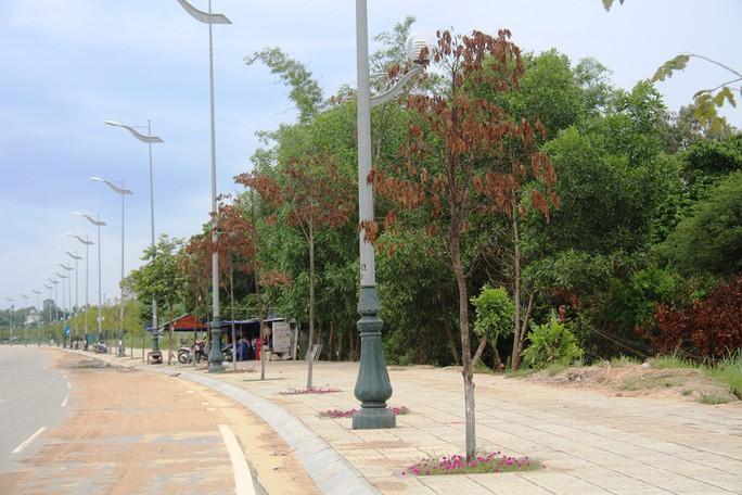 Hàng trăm cây xanh ở Quảng Ngãi chết khô bất thường - Ảnh 1.