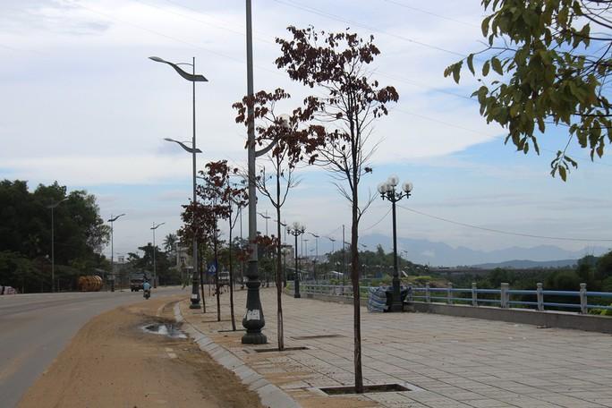Hàng trăm cây xanh ở Quảng Ngãi chết khô bất thường - Ảnh 3.