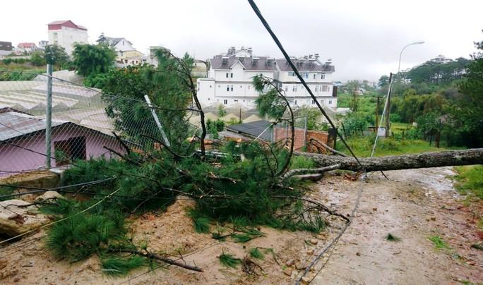 Lâm Đồng: Cây gãy đổ, ngập lụt, sạt lở đất nhà tốc mái la liệt do mưa bão - Ảnh 7.