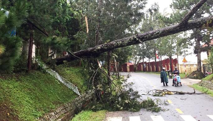 Lâm Đồng: Cây gãy đổ, ngập lụt, sạt lở đất nhà tốc mái la liệt do mưa bão - Ảnh 8.