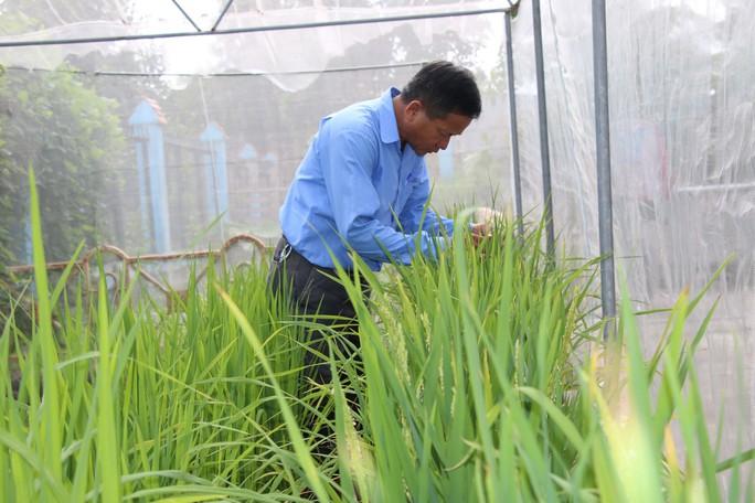Bắt tay làm gạo hữu cơ - Ảnh 1.