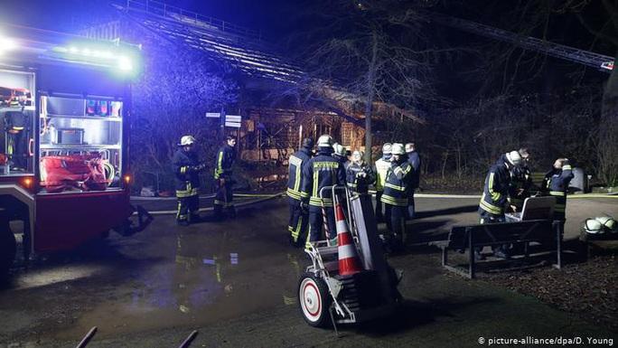 Đức: Pháo hoa giao thừa làm cháy và chết hết khỉ ở khu bảo tồn - Ảnh 1.