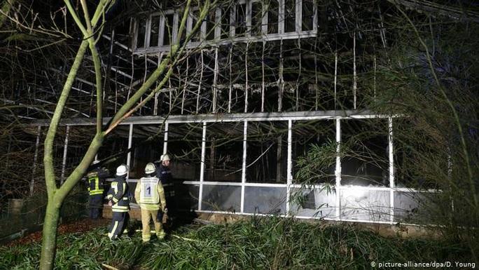 Đức: Pháo hoa giao thừa làm cháy và chết hết khỉ ở khu bảo tồn - Ảnh 2.