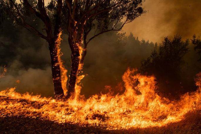 Úc: Cháy rừng hai bang nhập 1, siêu hỏa ngục hình thành - Ảnh 1.