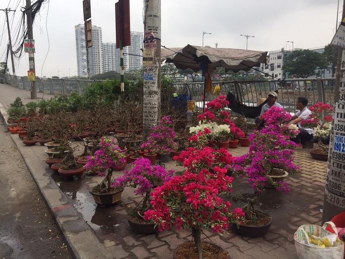 Đường phố TP HCM tràn ngập hoa Tết bán sớm - Ảnh 2.