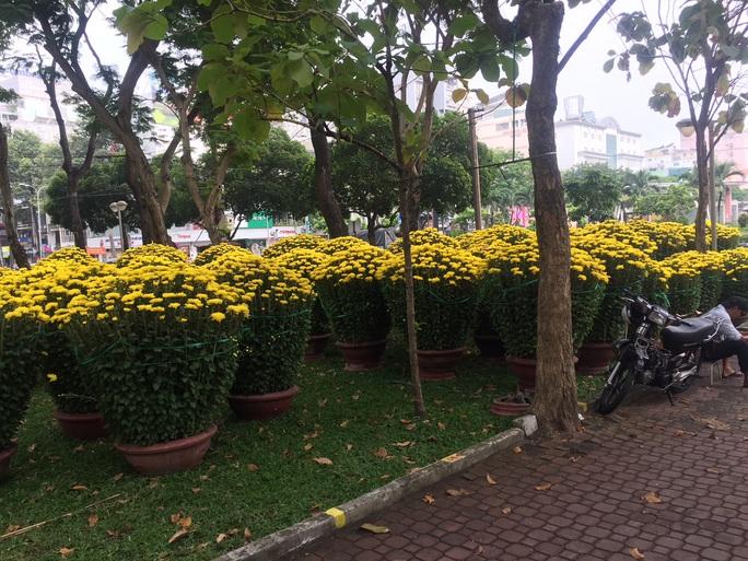 Đường phố TP HCM tràn ngập hoa Tết bán sớm - Ảnh 9.