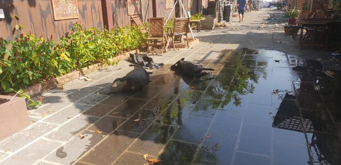 Sau cưỡng chế tổ hợp Gia Trang quán - Tràm Chim resort bị trộm - Ảnh 3.