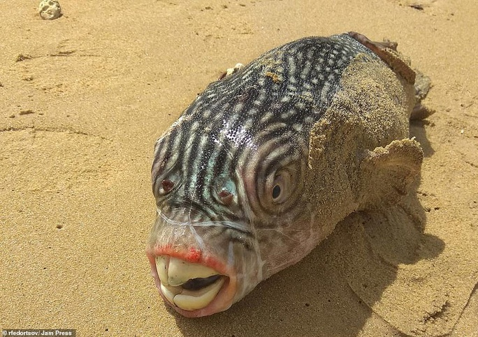 Bộ sưu tập sinh vật dưới đáy biển mới nhìn đã sợ - Ảnh 5.