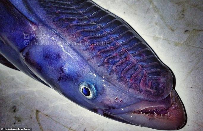 Bộ sưu tập sinh vật dưới đáy biển mới nhìn đã sợ - Ảnh 12.