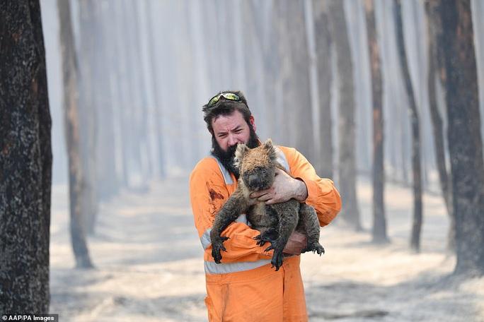 Úc: Động vật trên đảo quý hiếm Kangaroo bị tàn sát - Ảnh 1.