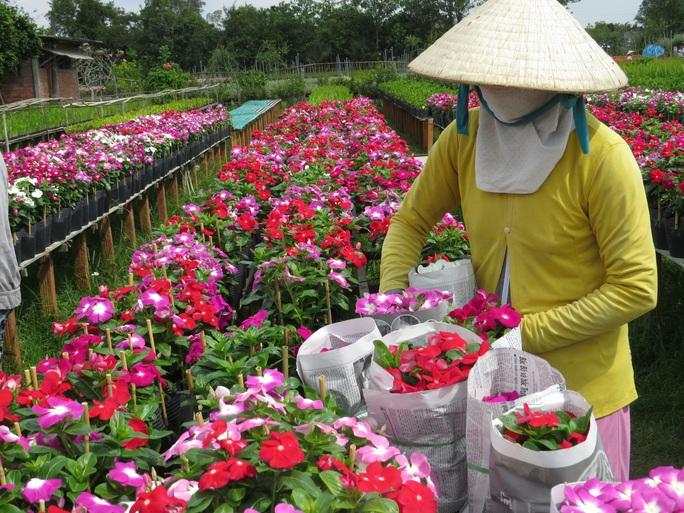 Nhiều chủng loại hoa mới, lạ ở Sa Đéc tấp nập lên phố - Ảnh 1.