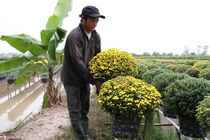 Nhiều chủng loại hoa mới, lạ ở Sa Đéc tấp nập lên phố - Ảnh 8.