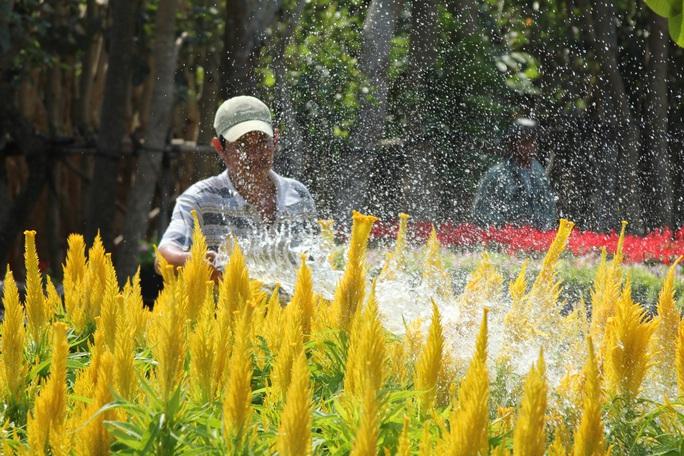 Nhiều chủng loại hoa mới, lạ ở Sa Đéc tấp nập lên phố - Ảnh 10.